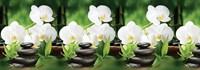Панель фартук Белая орхидея АБС 3,0 х 0,60