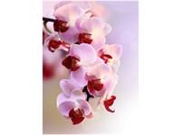 21-0007-FR Декор. панно на флизе Ветка орхидеи 2*2,8м
